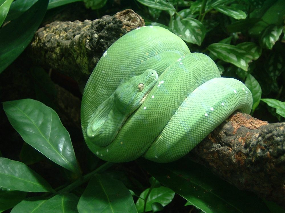snake-enclosure-chester-zoo-uk